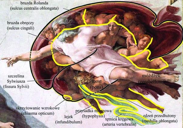 Adam - mózg