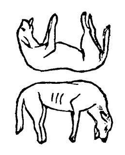 dwa psy zagadka